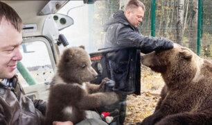 Pilotos adoptaron un oso que llegó a un aeródromo