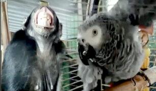 Ayudan a sofocar el intenso calor de animalitos en zoológico de Rusia