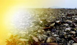 """Millones de mejillones habrían muerto """"cocidos"""" por ola de calor en Canadá"""