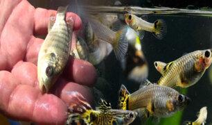 Arrojan miles de peces desde avión para repoblar la fauna de un lago