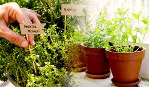 D'Mañana: ¿cómo cultivar plantas medicinales y aromáticas en casa?