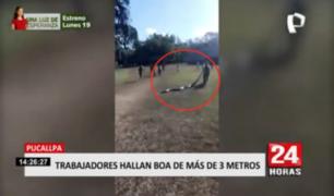 Trabajadores del Parque Natural de Pucallpa hallaron a boa de más de 3 metros