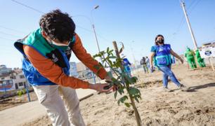Serpar plantará 1.500 árboles en la avenida Separadora Industrial en Villa El Salvador