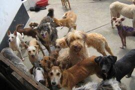 Ley de Cuatro Patas: Gobierno aprueba norma que incorpora la esterilización de animales