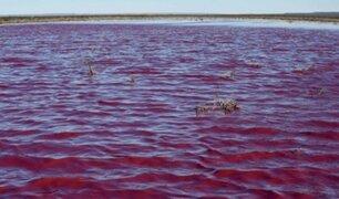 """Laguna se tiñó de """"rosa"""" por polución de industrias pesqueras"""