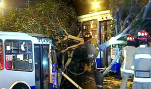 Bus de Corredor Azul se estrella contra árbol en el Cercado de Lima