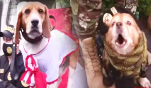 Así se prepara la Policía Canina para el Desfile Militar