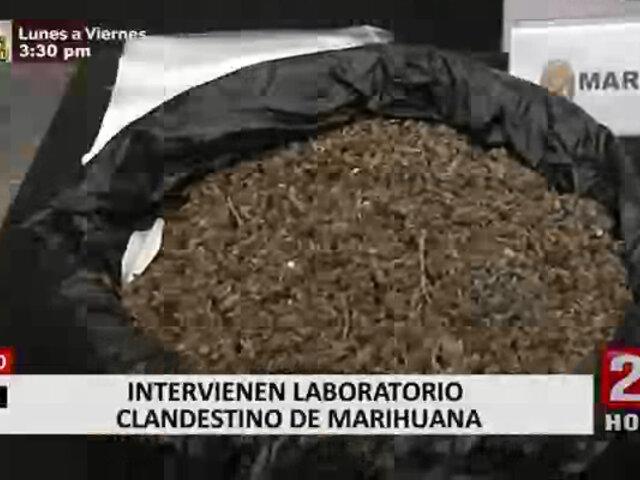 Intervienen laboratorio clandestino de marihuana en Surco