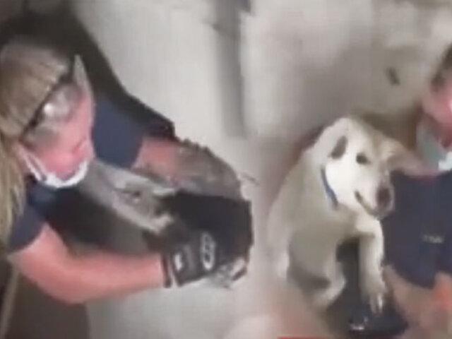 Rescatan a una perrita que estuvo atrapada cinco días en un sótano