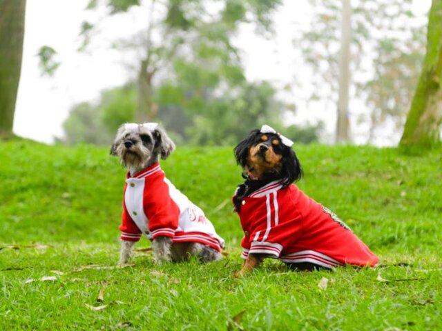 Fiestas Patrias: organizan concurso canino de disfraces en clubes zonales