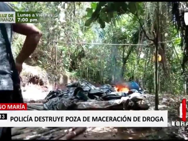 Tingo María: PNP destruye poza de maceración de droga