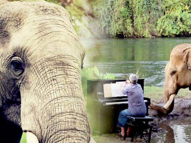 Tailandia: rehabilitan a elefantes maltratados con música clásica