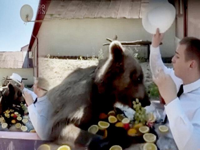 Rusia: temerario barbero se toma un baño junto a oso