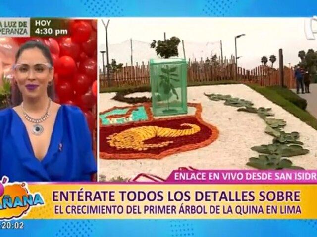 San Isidro: Conoce todos los detalles sobre el primer árbol de la Quina en Lima