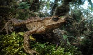 Registran 26 nuevas especies de anfibios y reptiles en Amazonas