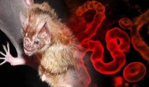 Detectan por primera vez un virus altamente infeccioso similar al Ébola en África