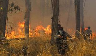 Huancayo: desconocidos provocan voraz incendio en bosque del fundo El Porvenir