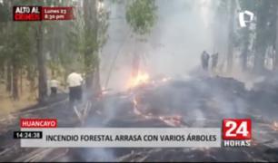 Incendio forestal arrasa con varios árboles en Huancayo