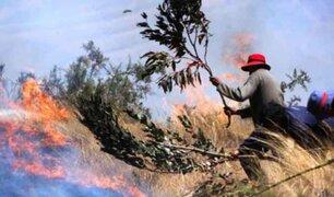 Puno: incendios forestales en cinco distritos arrasan más de 250 hectáreas de pastos naturales