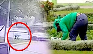 La Molina: vehículo que arrolló a trabajadora municipal tiene papeletas por S/.5,000