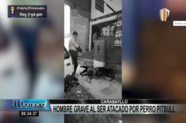 Carabayllo: hombre quedó en grave estado tras ataque de pitbull