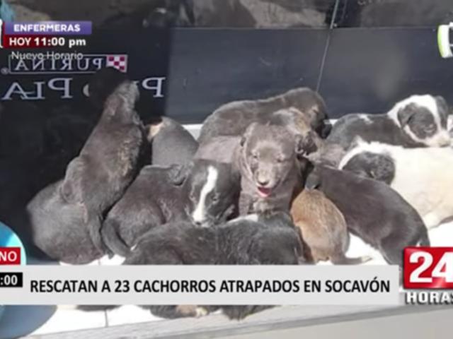 Puno: rescatan a 23 cachorros atrapados en socavón