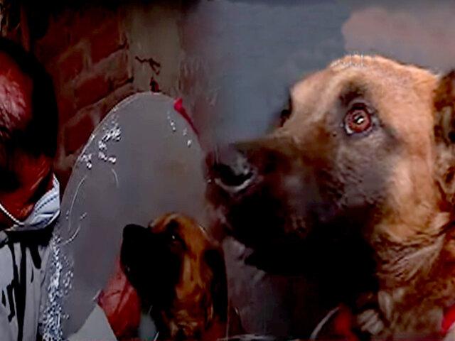 Maltrato animal: desalmado corta los genitales a un perro en SMP