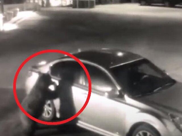 Viral: captan a oso abriendo auto de policía para revisar qué había en su interior