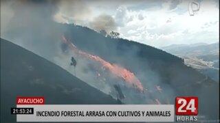 Ayacucho: reportan incendio forestal en Vinchos