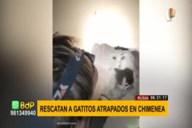 Rusia: rescatan a gatitos atrapados en chimenea