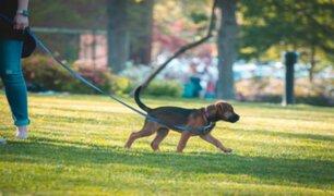 Piura: dueños de perros y gatos deberán tramitar licencias para sus mascotas