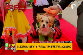 """Comas: eligen a """"rey"""" y """"reina"""" en Festival Canino"""