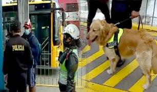Metropolitano: realizan operativo policial para identificar delincuentes