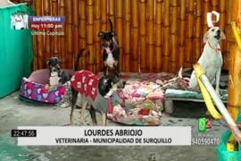 Surquillo: 14 perritos se quedaron sin hogar luego de que su dueño falleciera
