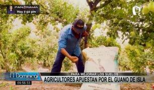 Cañete: agricultores apuestan por guano de islas para mejorar sus cultivos