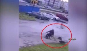 Hombre en silla de ruedas defiende a su cachorro de ataque de perros callejeros
