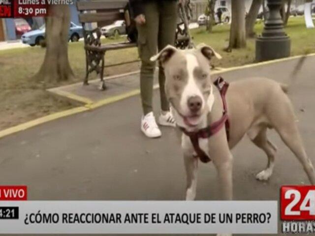 ¿Cómo reaccionar ante el ataque de un perro?