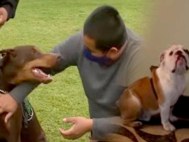 Conozca cómo entrenar a su mascota para evitar tener un perro agresivo