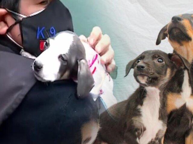 Tú puedes adoptar uno: 14 perritos quedan huérfanos y buscan un hogar