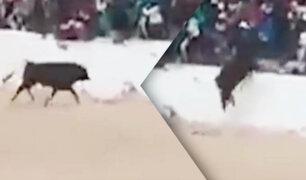 Toro salta muro de seguridad y ataca al público en Juliaca