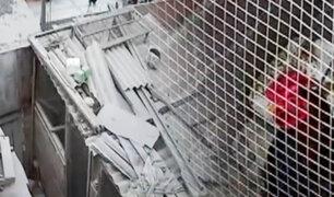No los dejan dormir: Vecinos cansados por criadero de gallos en SMP