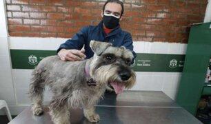 San Isidro: Municipio inició implantación de microchips en canes y gatos
