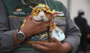 Junín: animales menores con trajes típicos fueron la sensación en el Día Nacional del Cuy