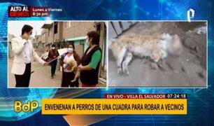 VES: denuncian envenenamiento masivo de perros en toda una calle