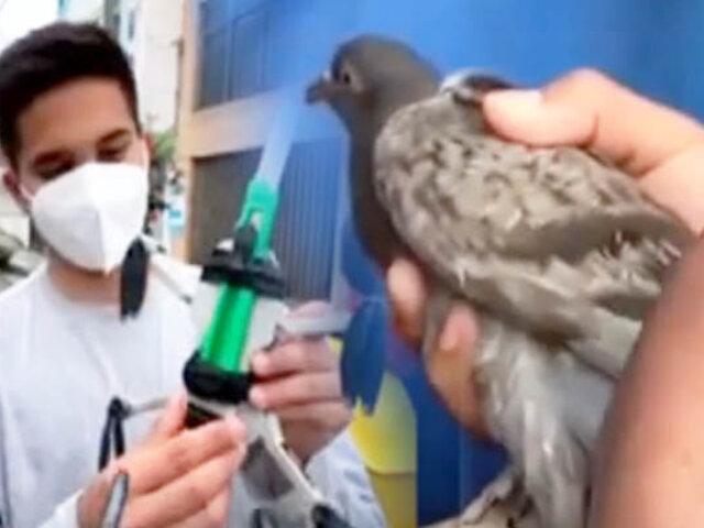 Rescate de paloma con drone en Barranca se hace viral